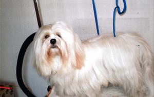 Les nouveautés de notre salon de toilettage canin et félin